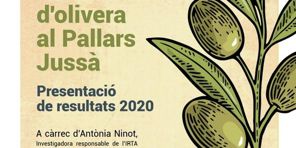 Estudi de varietats autòctones d'olivera al Pallars Jussà